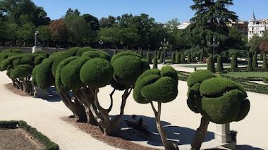 Cipreses topiarios en el Parterre del Retiro de Madrid
