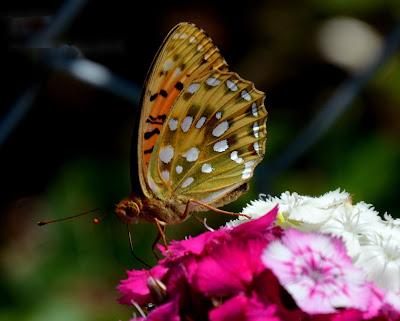 Garten, Natur, Insekten, Nützlinge, natur, pryfed, organebau llesol, Garden, thiên nhiên, côn trùng, sinh vật có lợi, Tuin, natuur, insekte, voordelige