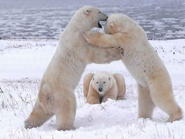 أجمل الصور للحيوانات في الطبيعة 2