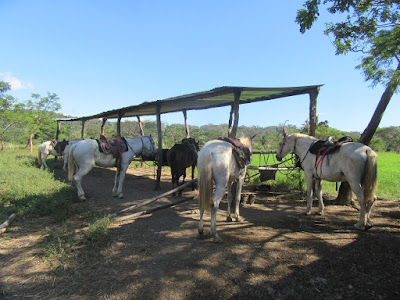 Horsejungle Samara