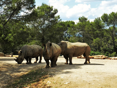 rinoceronti zoo montpellier gratis