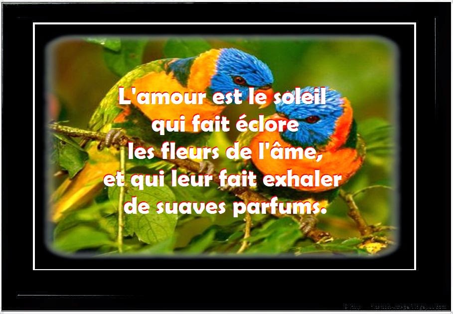 Une nouvelle citation d'amour ~ Citation en image : photo citation