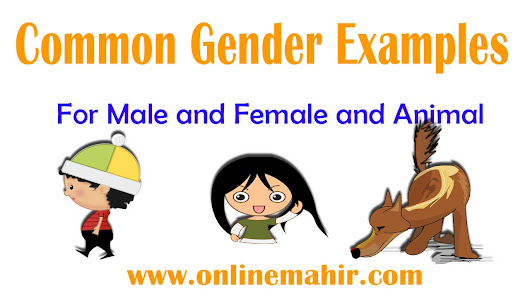 Common Gender Noun Examples and List