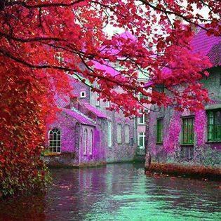 Nature, Bruges - Belgium
