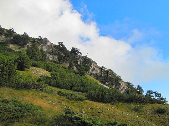 Zbocze porośnięte sosną bośniacką (Pinus heldreichii).