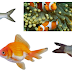 264 Popular Fish Names All Time