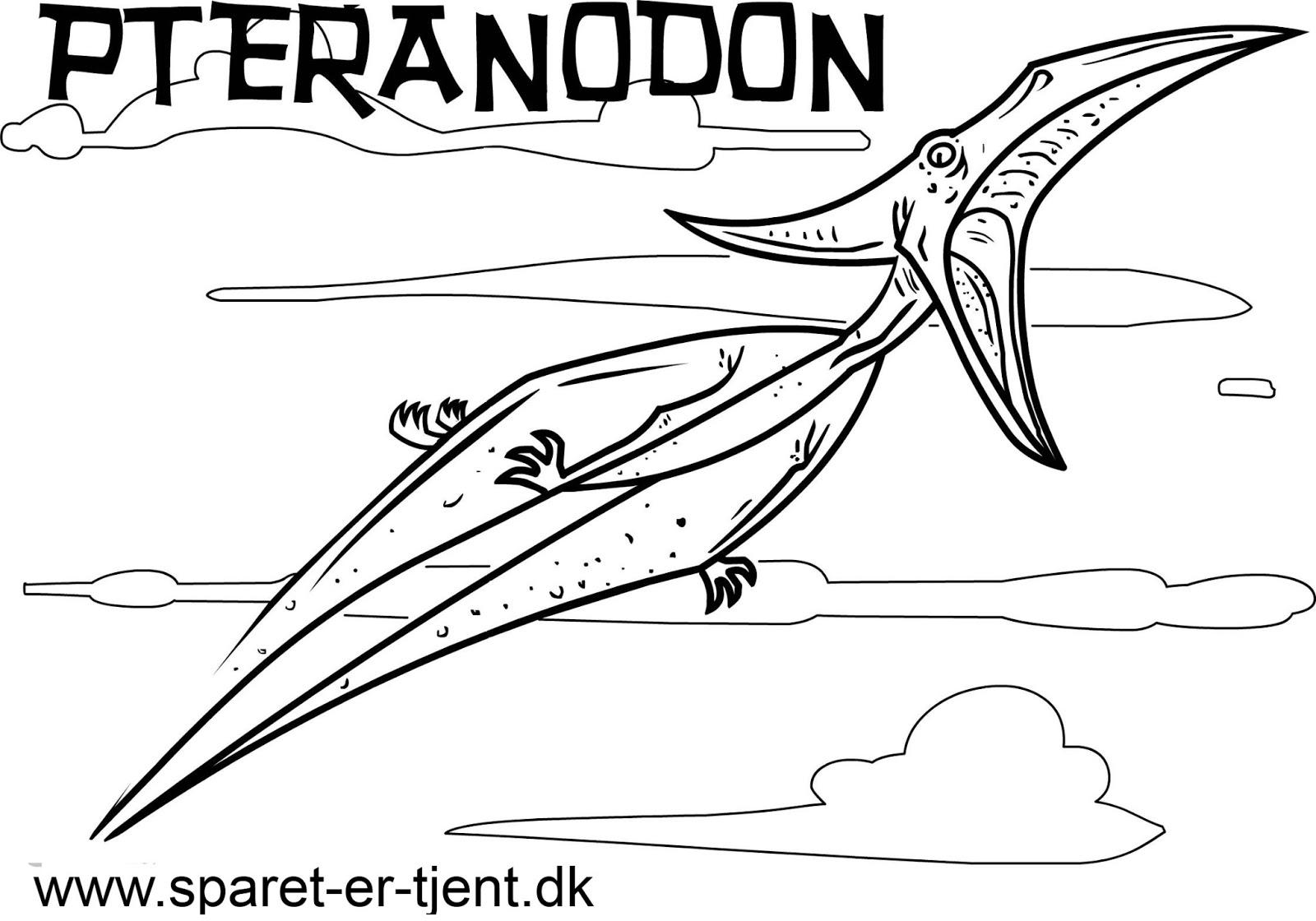 Bello Disegni Dinosauri Volanti Da Stampare E Colorare Migliori