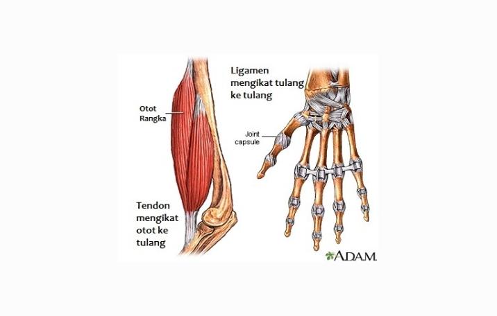Mengobati nyeri lutut secara alami