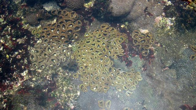 Karang-karang terlihat di lautan