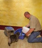 Kattenbak schoonmaken