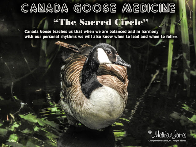 Canada Goose Totem Meaning