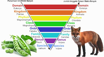 Tingkatan Takson dalam Sistem Klasifikasi Makhluk Hidup