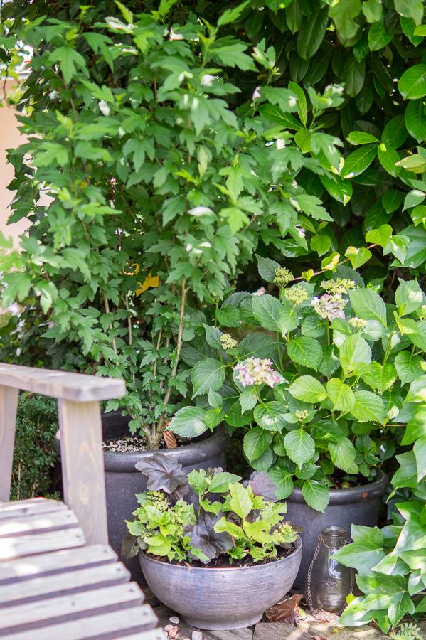 Blog + Fotografie by it's me! | fim.works | Bunt ist die Welt | Garten im Juni 2016 | Hibiscus und Hortensien in Pflanztöpfen