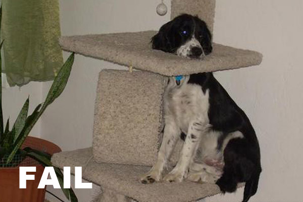 The Biggest Collection Of Dog Fail In 2012 Everything Fail