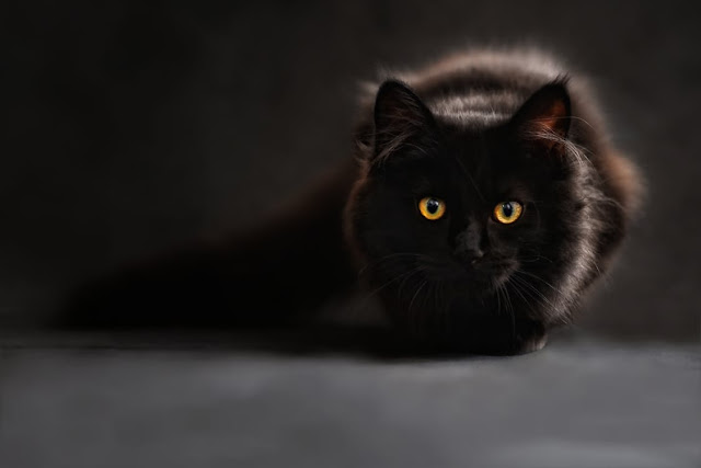 Are Cats Social Animals?
