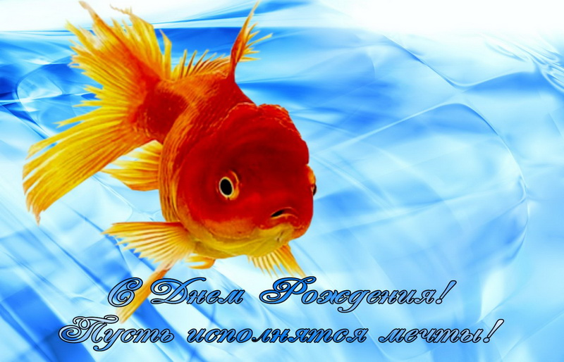 поздравление с днем рождения для рыбы от рыбы изготовления бюгельные протезы