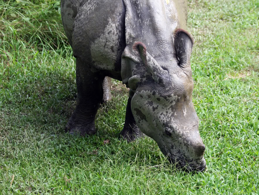A rhino at  Royal Chitwan National Park.