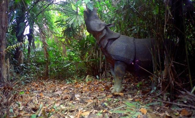 Contoh Cagar Alam dan Suaka Margasatwa di Indonesia
