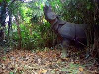 12 Contoh Cagar Alam dan Suaka Margasatwa di Indonesia