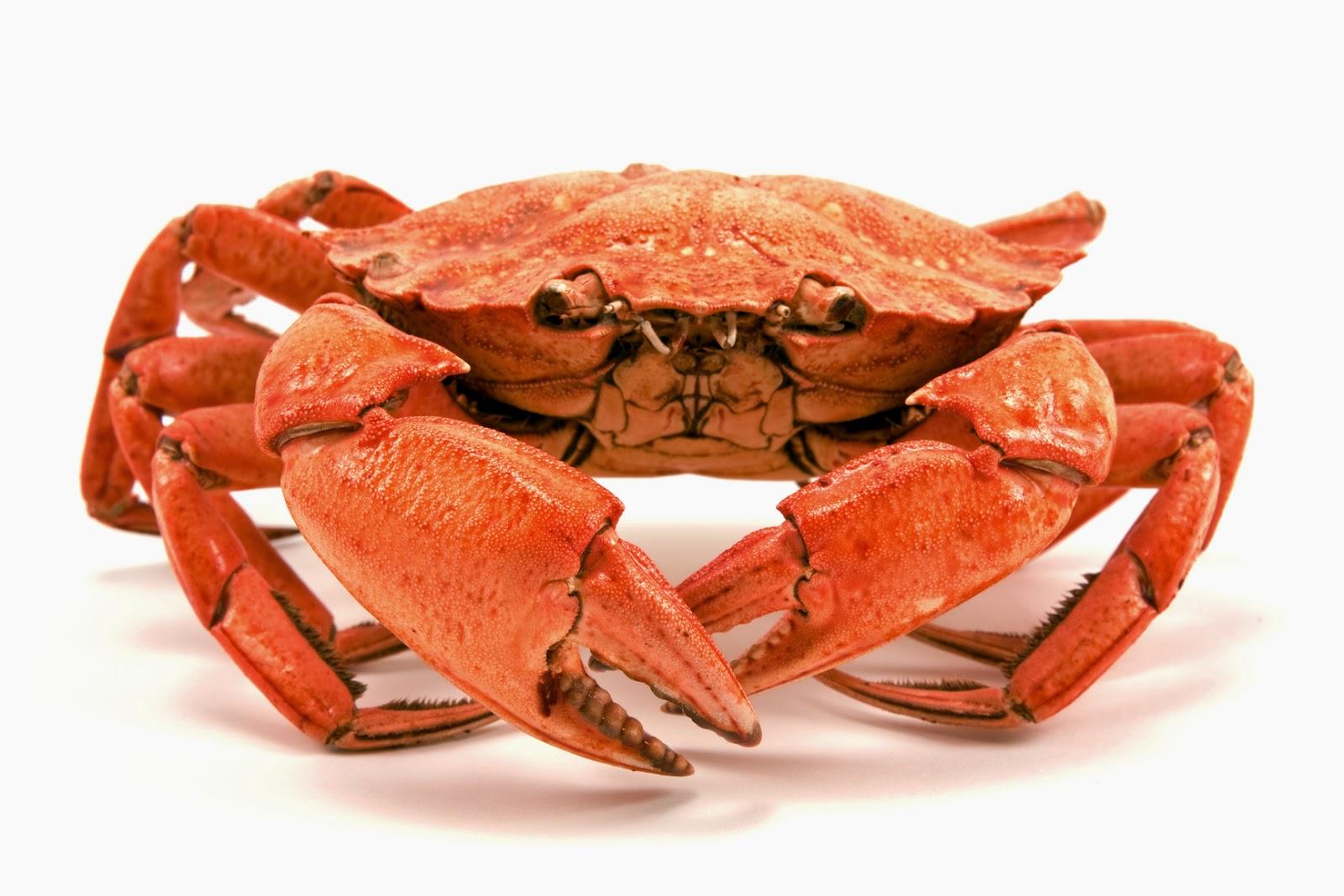 Resultado de imagen de cangrejo