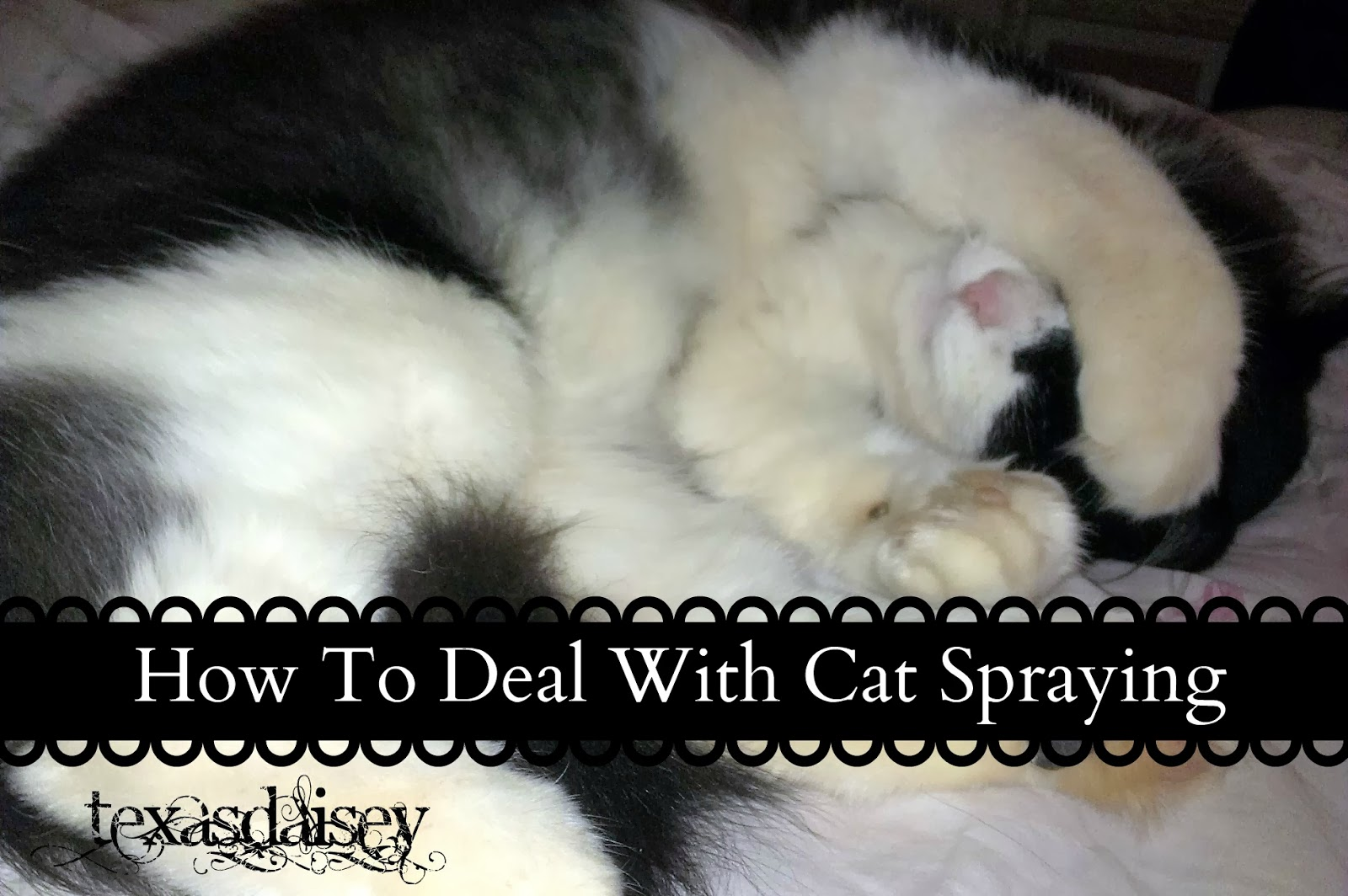 training a cat to not spray