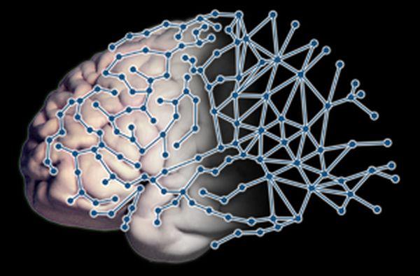 «Τι κάνει ορισμένους εγκεφάλους περισσότερο συνδεδεμένους από άλλους –  αποδίδεται a13dce81f3d