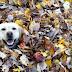ΤΟ ΦΘΙΝΟΠΩΡΟ! Ο σκύλος παίζει με τα φύλλα...
