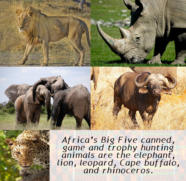 Africa's Big Five canned, game and trophy hunting animals are the elephant, lion, leopard, Cape buffalo, and rhinoceros.