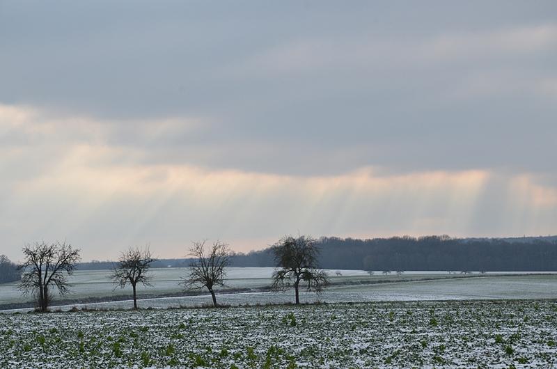 Paysage de Neige Campagne Arbre Puisaye Yonne