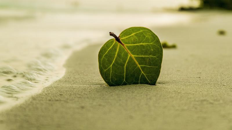 Leaf on Tropical Beach