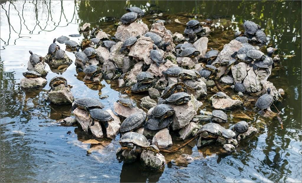 Греция Афины Национальный сад парк черепаха