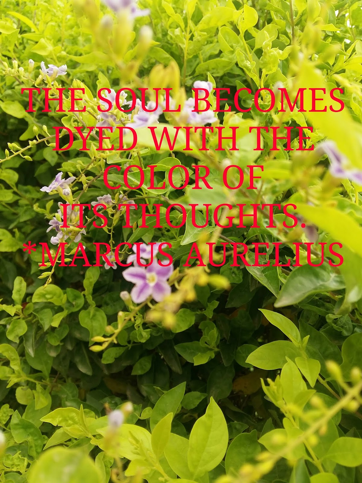 THOUGHTS   THE SOUL BECOMES  DYED WITH THE  COLOR OF ITS  THOUGHTS.  - MARCUS AURELIUS