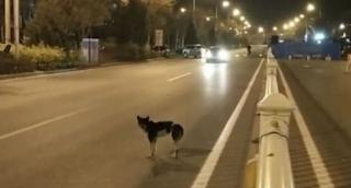 Σκύλος εδώ και 80 μέρες περιμένει στο σημείο που σκοτώθηκε το αφεντικό του