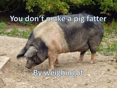 you don't make a pig fatter by weighing it