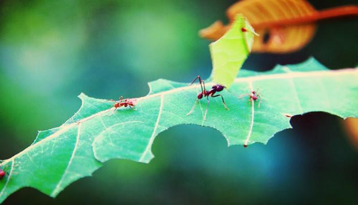 Eliminar plagas con pesticidas