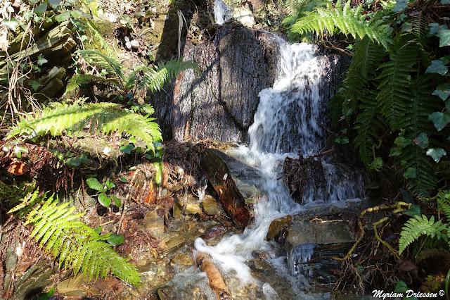 cascade dans la Montagne Noire