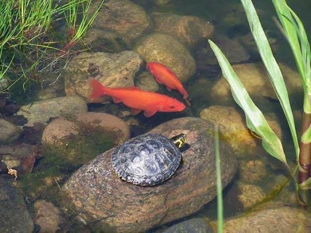 terjadi percakapan antara seekor ikan dan seekor kura Percakapan Seekor Ikan dan Seekor Kura-kura