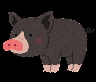 黒豚のイラスト