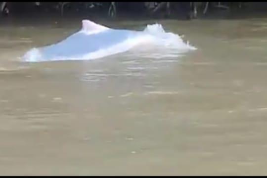 Lumba-lumba yang nampak di Labura.
