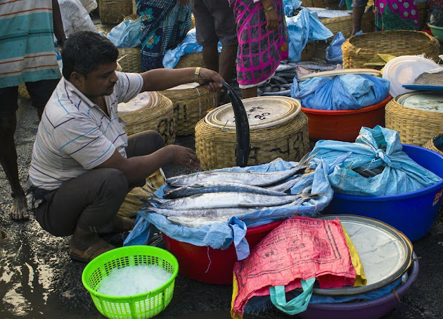 sassoon docks, fish trader, packing, fish, mumbai, india,