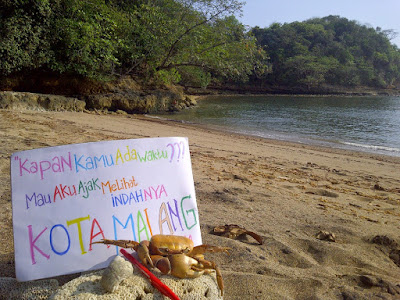 akcaya tour & travel, +62 822.333.633.99, harga travel malang banyuwangi
