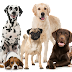 How many breeds of Dogs live in the world ?