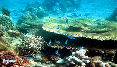 snorkeling-rajasua