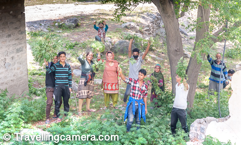 And here was another group which was working on destroying the plants of marijuana. All of them were happy to get clicked.