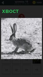 По полю скачет заяц с коротким хвостом и высокими стоячими ушами, наблюдая за местностью