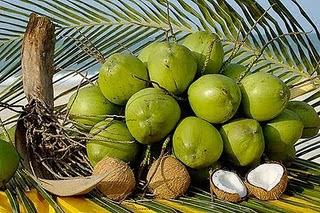 Gastronoma a Libreta Abierta I Coco