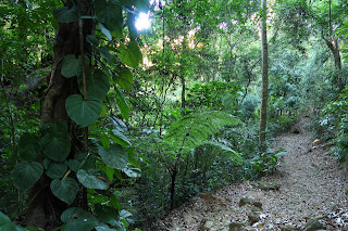 Vegetated spring area in Puriscal