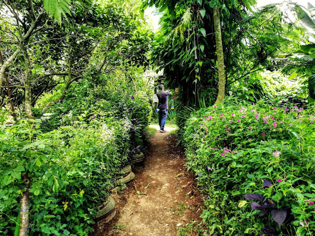 Path Going to Milea Bee Farm