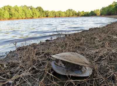 Stranded shell on lake shore in George Bush Park