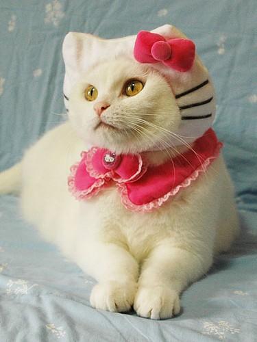 gatita hermosa con moños rosas